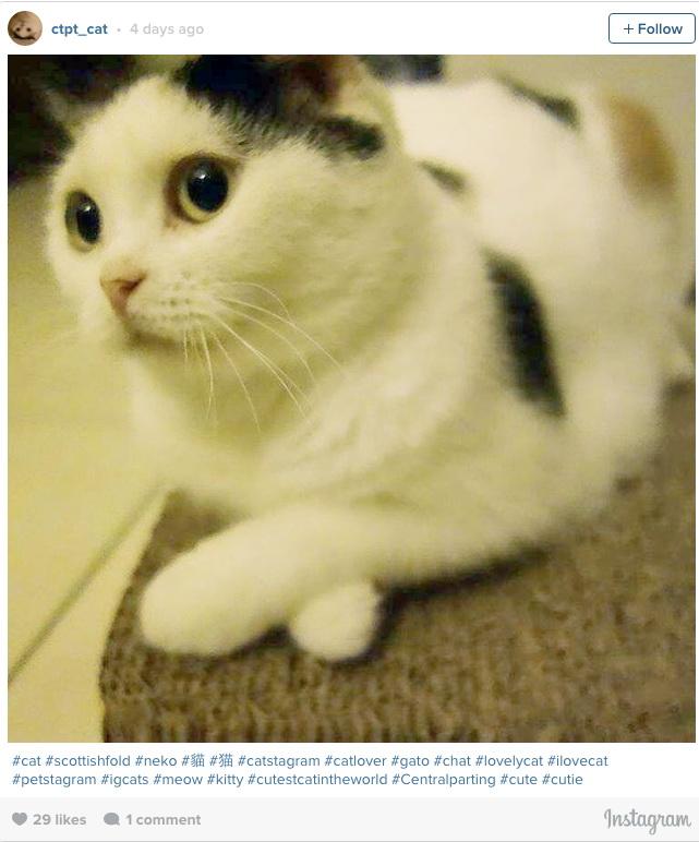 Посмотрите на эти фотографии, и вы уже никогда не захотите иметь дома кота